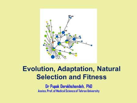 Evolution, Adaptation, Natural Selection and Fitness Dr Pupak Derakhshandeh, PhD Assiss. Prof. of Medical Science of Tehran University.