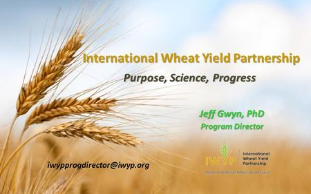 International Wheat Yield Partnership