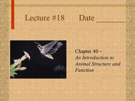 Lecture #18Date _______ Chapter 40 ~ An Introduction to Animal Structure and Function.