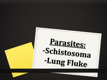 Parasites: -Schistosoma -Lung Fluke. Schistosoma 0 There are 3 species of Schistosoma that are important to humans 0 S. mansoni 0 S. japonicum 0 S. haematobium.