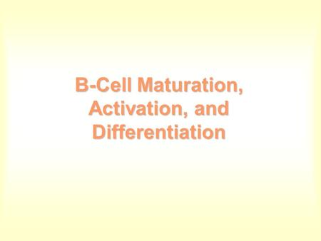 B-Cell Maturation, Activation, and Differentiation.