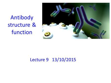 Antibody structure & function Lecture 9 13/10/2015.