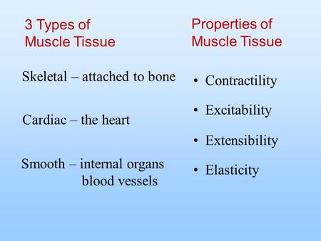 Contractility Properties of Muscle Tissue Excitability Extensibility Elasticity 3 Types of Muscle Tissue Skeletal – attached to bone Cardiac – the heart.