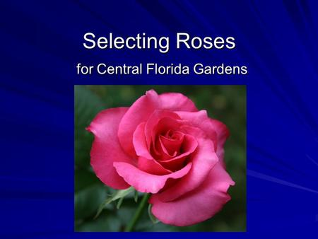 Selecting Roses for Central Florida Gardens. ? Select Explore Rationale Concept Concept.