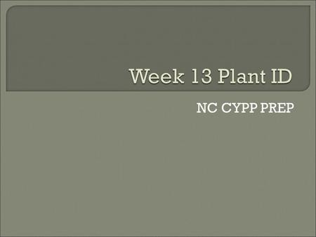 NC CYPP PREP.  Common name: southern red oak  Description: 1. Height: 70-90 ft. 2. Spacing: 60-70 ft. 3. Exposure: Sun 4. Foliage: 5-9 in. Alternate,
