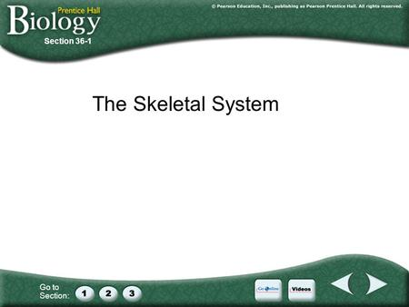 Go to Section: Section 36-1 The Skeletal System. Go to Section: 36–1 The Skeletal System A. The Skeleton B. Structure of Bones C. Development of Bones.