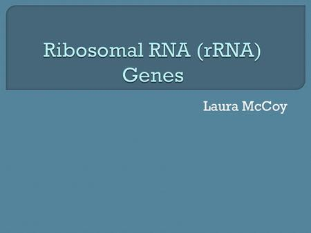 Laura McCoy.  rRNA genes are a multi-gene family  Located in the nucleolus of the cell  Genes are found in tandem arrays  rRNA plus ribosomal proteins.