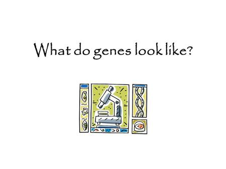 What do genes look like?. 1. Where are genes located? Genes are located on our chromosomes. Chromosomes are different sizes. There are hundreds of genes.