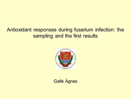 Antioxidant responses during fusarium infection: the sampling and the first results Gallé Ágnes.