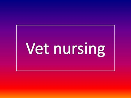 Why I chose vet nursing as a career. Pictures.