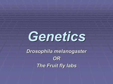 Drosophila melanogaster OR The Fruit fly labs