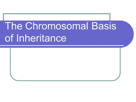 The <strong>Chromosomal</strong> Basis of Inheritance. <strong>Chromosomal</strong> Theory of Inheritance <strong>Genes</strong> are physically located at loci on <strong>chromosomes</strong> Additionally, it is <strong>chromosomes</strong>.