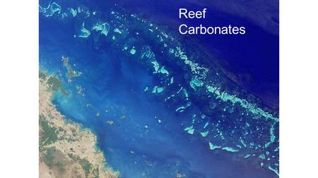 Reef Carbonates. Definition of a reef 1.Rigid, wave-resistant structure 2.Bathymetric relief above seafloor 3.Form in situ by organic growth (rarely by.