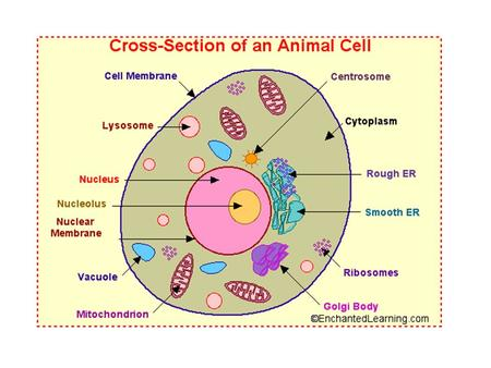 cell membrane - the thin layer of protein and fat that surrounds the cell. The cell membrane is semipermeable, allowing some substances to pass into the.