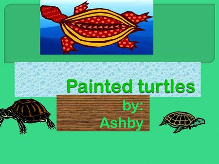 By: Ashby. I picked my topic because I love turtles!!!& my grandma is really into painted turtles!!!It also just popped up in my head!!! Hope you like.