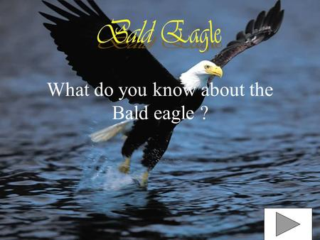 What do you know about the Bald eagle ? What color are Bald Eagles Bald Eagles are Black and white. They are black on the body and also brown. The neck.