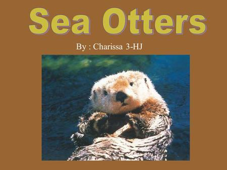 By : Charissa 3-HJ. Introduction The animal I researched is the Sea Otter. Sea otter is a mammal. I want to learn more about the sea otter, because sea.