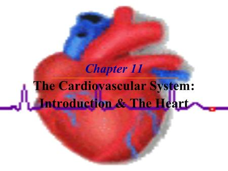 Chapter 11 The Cardiovascular System: Introduction & The Heart.