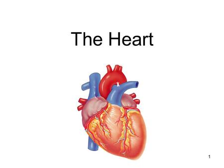 1 The Heart. Heart Anatomy & Basic Function (1) Cardiovascular Function Cardiovascular = Heart, Arteries, Veins, Blood Function:Function: –Transportation.