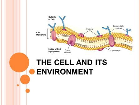 "THE CELL AND ITS ENVIRONMENT. HOMEOSTASIS Homeostasis- "" steady state"" or balance cells constantly seek homeostasis The Cell Membrane is responsible for."