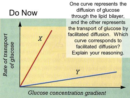 Do Now One curve represents the diffusion of glucose through the lipid bilayer, and the other represents the transport of glucose by facilitated diffusion.