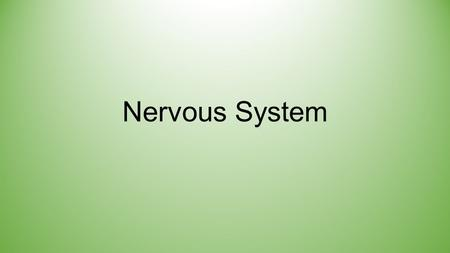 Nervous System. Divisions of the Nervous System Central Nervous System (CNS) Made up of the Brain and Spinal Cord Peripheral Nervous System (PNS) All.