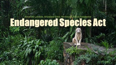 the extinction of sumatran tigers in asia essay Almost 80% of orangutan habitat has disappeared in the last 20 years we are  losing over 6,000 orangutans a year there are now only 400 sumatran tigers left .