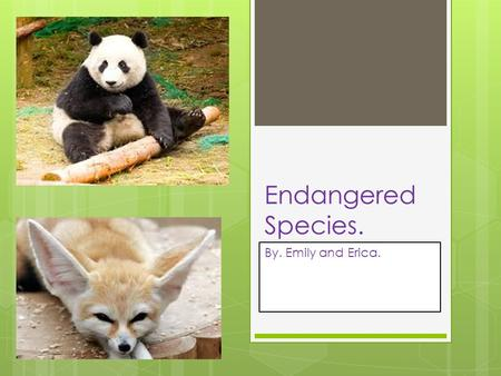 Endangered Species. By. Emily and Erica.. Endangered Species.  Humans are one type of animal species, mammals.  Endangered means that there are very.