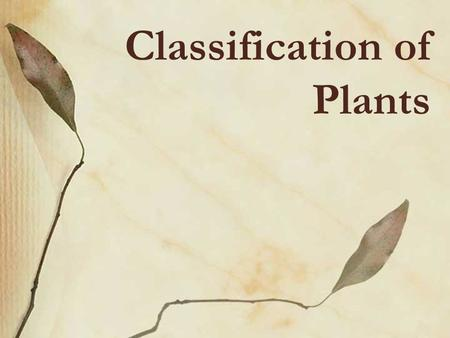 Classification of Plants. The Plant Life Cycle A plant alternates between 2 adult phases during its lifetime. The SPOROPHYTE or diploid phase (2n) is.