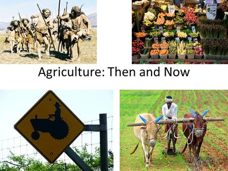 Agriculture: Then and Now. Agriculture: Then was developed at least 10,000 years ago Evidence points to the Fertile Crescent of the Middle East as the.