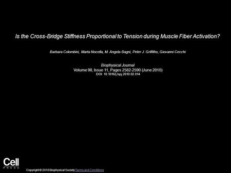 Is the Cross-Bridge Stiffness Proportional to Tension during Muscle Fiber Activation? Barbara Colombini, Marta Nocella, M. Angela Bagni, Peter J. Griffiths,