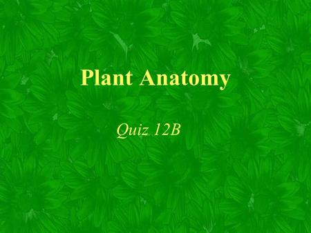 Plant Anatomy Quiz 12B. Two important characteristics of plant cells cell walls plastids.