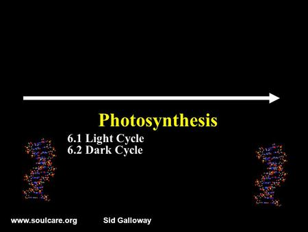 Www.soulcare.orgSid Galloway Photosynthesis 6.1 Light Cycle 6.2 Dark Cycle.