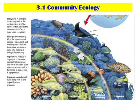 3.1 Community Ecology. Vocabulary List community limiting factor tolerance ecological succession primary succession climax community secondary succession.