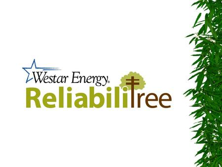 ReliabiliTREE Program  Revitalized Vegetation Management Program. –25 Dedicated Crews for 4 years. –Trees adjacent to the line are pruned for 4 years.
