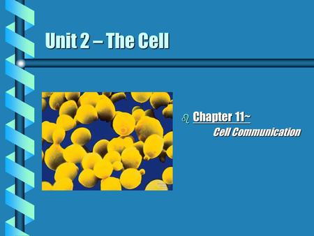 Unit 2 – The Cell Chapter 11~		Cell Communication.