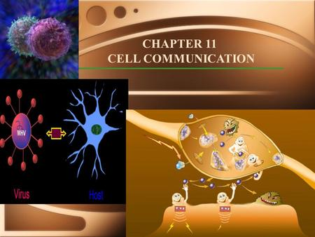 CHAPTER 11 CELL COMMUNICATION. Local 'talk': Paracrine Signaling (local secretions from neighboring cells), direct cell to cell 'talk'/via diffusible.