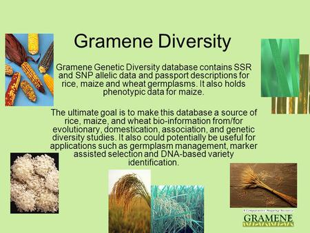 Gramene V. 211 Gramene Diversity Gramene Genetic Diversity database contains SSR and SNP allelic data and passport descriptions for rice, maize and wheat.