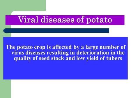 The potato crop is affected by a large number of virus diseases resulting in deterioration in the quality of seed stock and low yield of tubers Viral diseases.