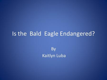 Is the Bald Eagle Endangered?