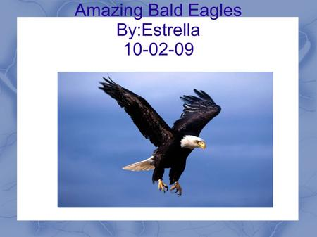 Amazing Bald Eagles By:Estrella 10-02-09. Introduction Many people don't like bald eagles. But why don't many people like bald eagles? Did you know they.