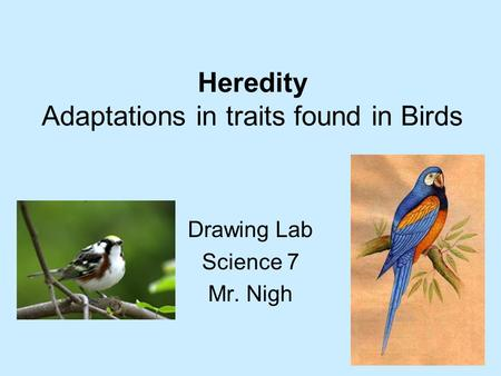 Heredity Adaptations in traits found in Birds