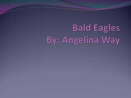My name is Angelina. I am doing a Bald Eagle because they are interesting to me and my family too.
