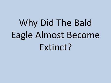 Why Did The Bald Eagle Almost Become Extinct?. Instructions You will work in groups of 3-4 to examine evidence of why the bald eagle almost became extinct.