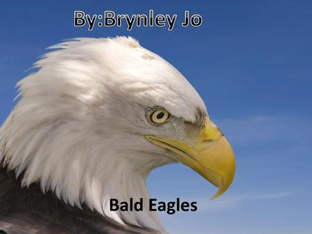 By:Brynley Jo Bald Eagles.