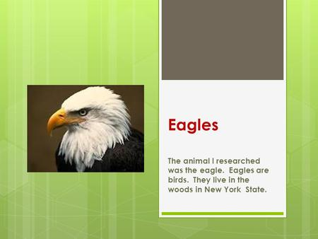 Eagles The animal I researched was the eagle. Eagles are birds. They live in the woods in New York State.