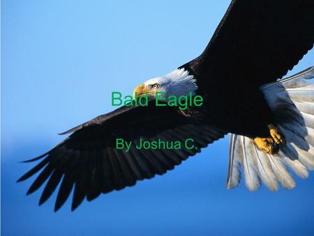 Bald Eagle By Joshua C. Physical Characteristics  They have a white head and tail.  They have a beak that is large and hooked.  They have a body length.
