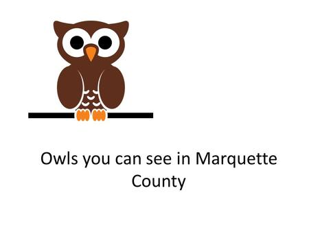 Owls you can see in Marquette County Brought to you by Howard and Betty Love Marquette County featuring.