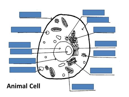 Animal Cell. Plant Cell Journey through the cell https://www.youtube.com/watch?v=VJEfeXU3 f24 https://www.youtube.com/watch?v=VJEfeXU3 f24.