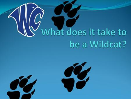 What are some examples & characteristics of Wildcats?